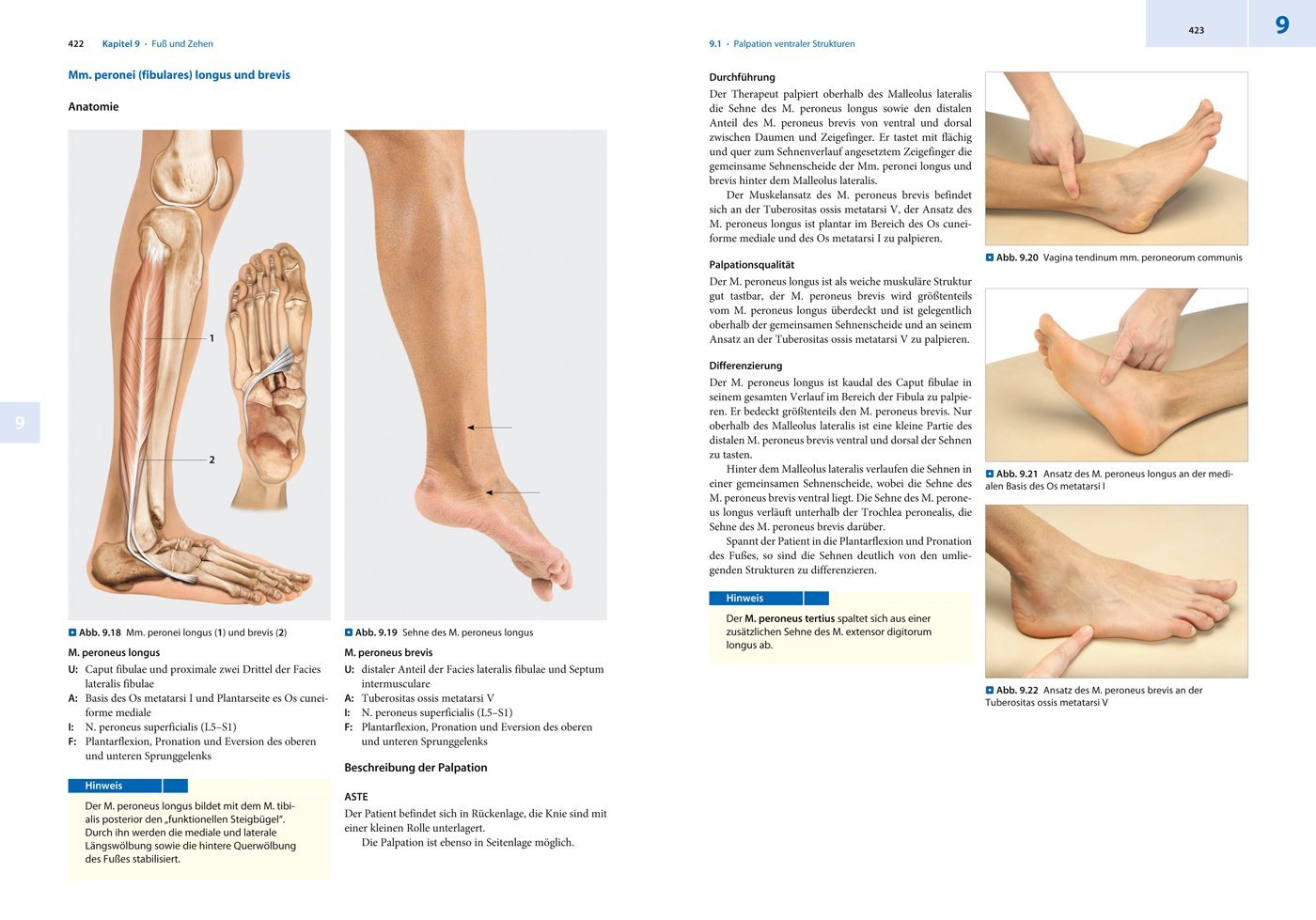 Palpation in Vivo: Anatomische Strukturen gezielt lokalisieren und ...