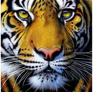 Image result for tiger face