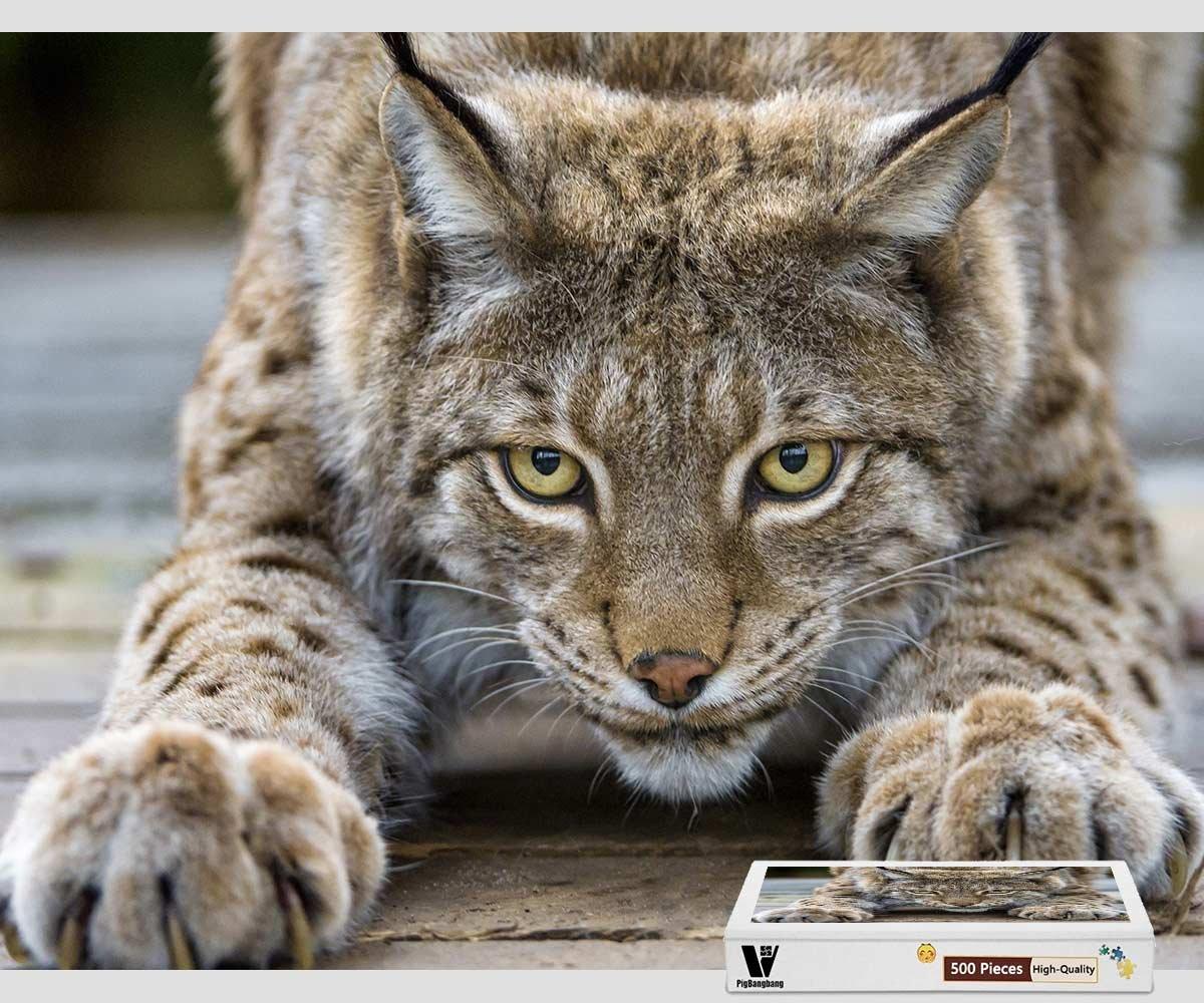 【福袋セール】 pigbangbang – Claws面、20.6 X X 15.1インチ、intellectivゲーム木製ジグソーパズルwith接着剤inボックスギフトwrapping-キュートLynx Cat Eyes Claws面 – 500ピースジグソーパズル B07CKR35KW, カミウラチョウ:4f5c59fe --- fenixevent.ee