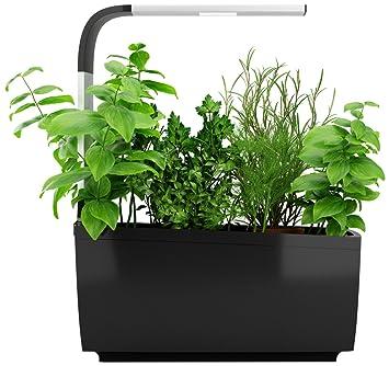 faire pousser des legumes en interieur potager aromatique cap sur la jardinire duintrieur. Black Bedroom Furniture Sets. Home Design Ideas