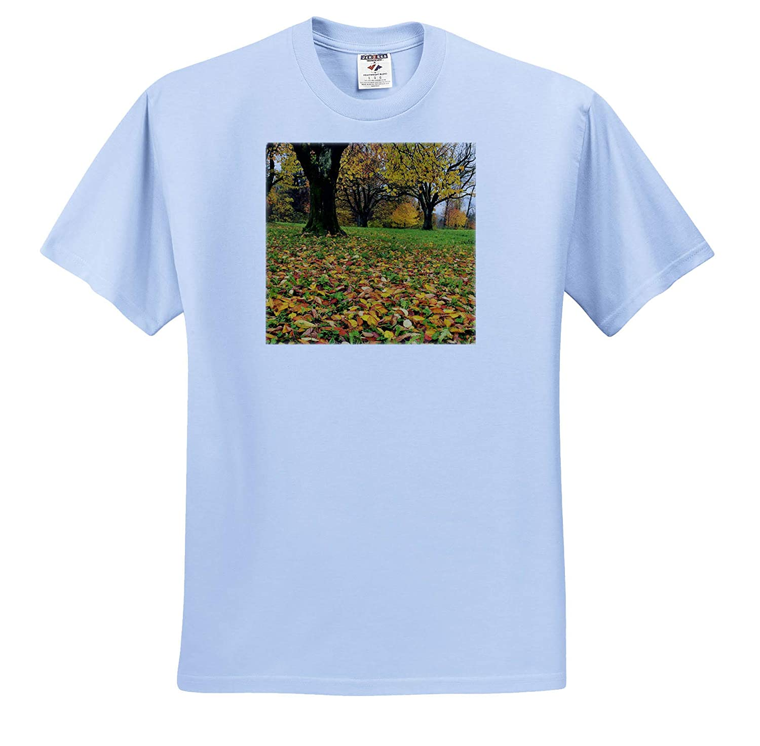Fall Colors in Orchard Cherry Tree ts/_313874 3dRose Danita Delimont - Adult T-Shirt XL Autumn