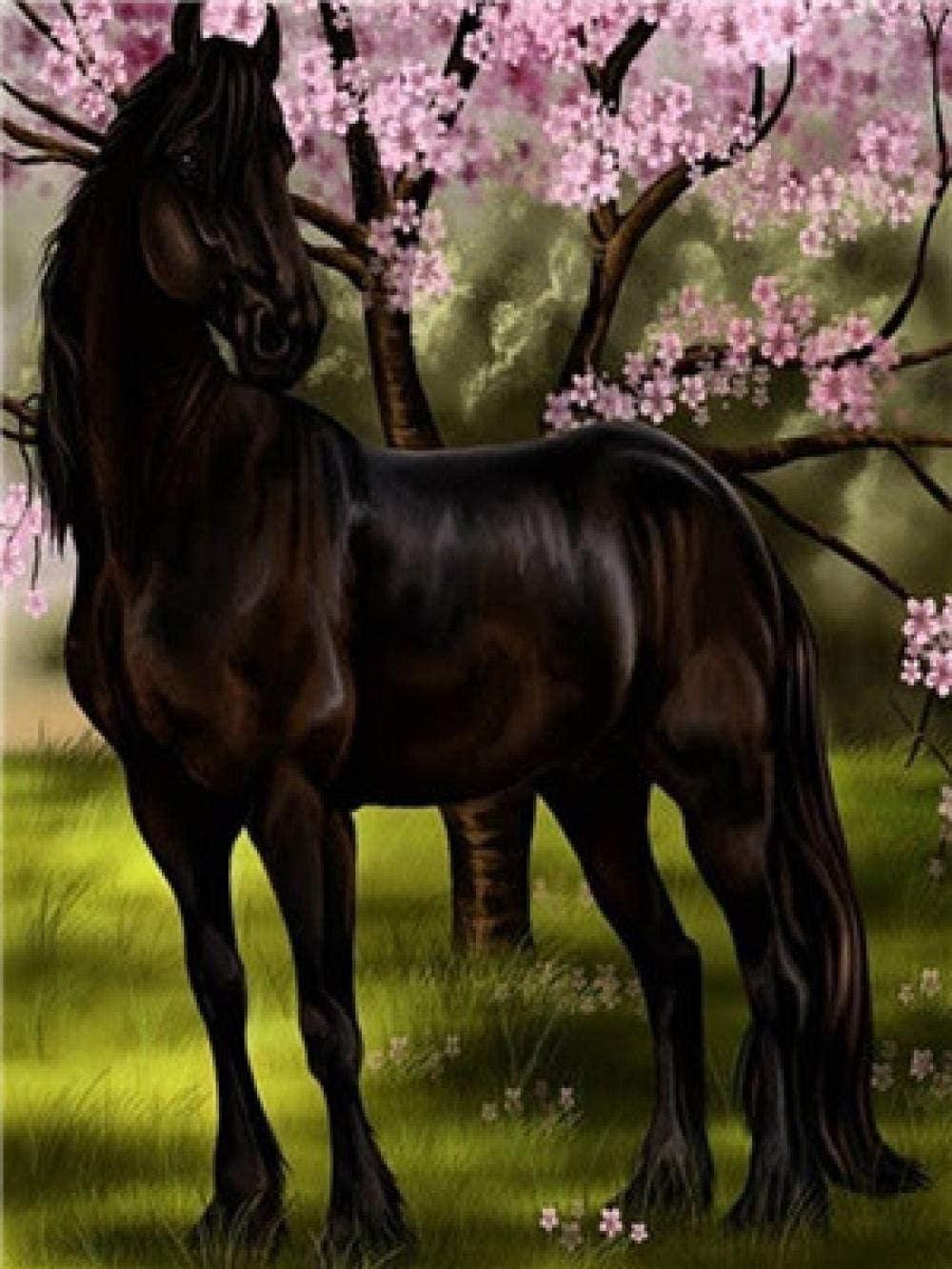 Qbbes Pintura sobre Lienzo Principiante Animal Caballo Negro Pintura por Números para Adultos Y Niños Pintura sobre Lienzo con Pinceles Y Pinturas Acrílicas B