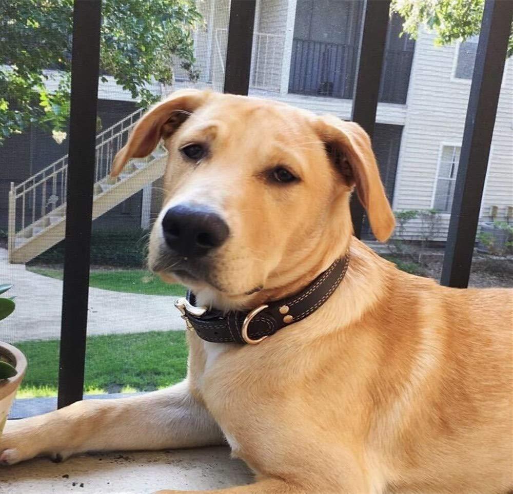 Perros peque/ños Resistente Piel aut/éntica//Ajustable SLZZ Collar de Perro de Piel Personalizado Premium con Placa identificativa grabada medianos y Grandes Suave al Tacto