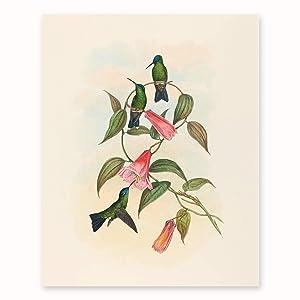"Hummingbird Wall Art (Living Room Wall Decor, Bedroom Print) John Gould Botanical Bird Artwork ""Wood Nymph"" - Unframed"