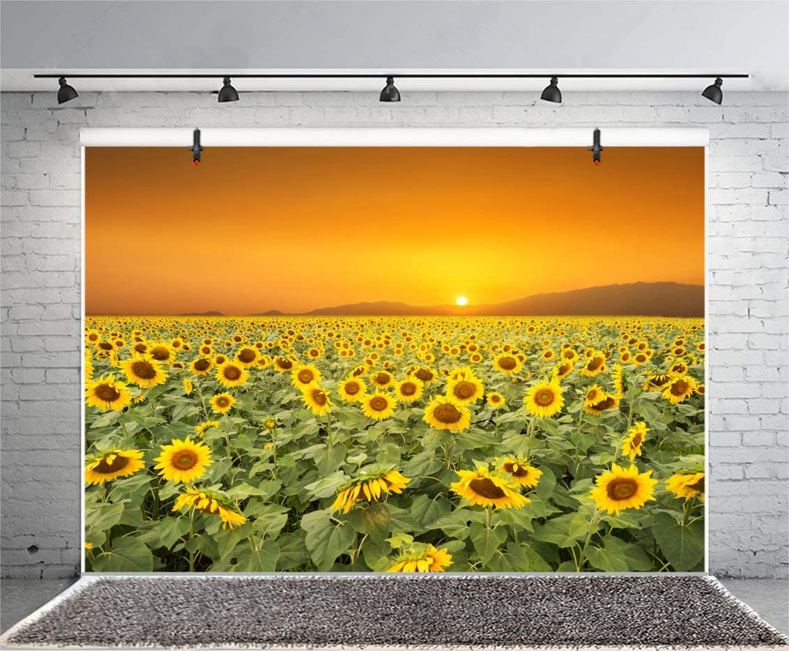 DORCEV Sunflower Backdrop Autumn Harvest Party Birthday Party Wedding Ceremony Party Background Sunset Sunflowers Garden Room Wallpaper Kids Adult Photo Studio Props
