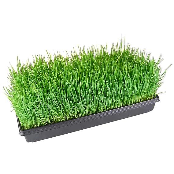 Bandejas de cultivo para plantas (agujeros de drenaje) - 50 ...