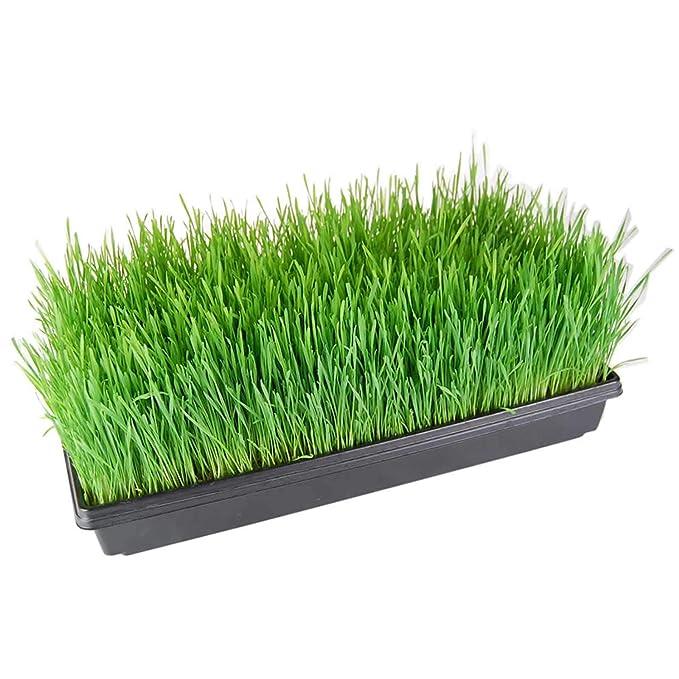 Bandejas de cultivo para plantas (agujeros de drenaje) - 50,8 cm x 25,4 cm - perfecto para jardín, semillas, bandejas de cultivo para semillas, ...