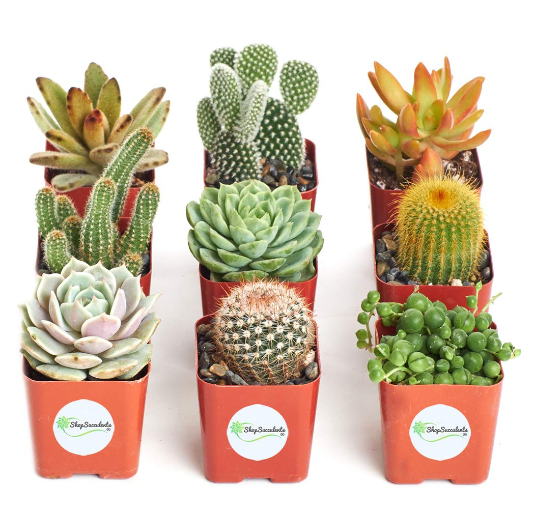 Shop Succulents | Cactus & Succulent Collection of Live Plants, Hand Selected Variety Pack of Cacti and Mini Succulents | Collection of 9