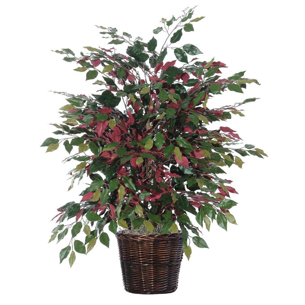 Vickerman TXX0340 Everyday Capensia Bush, 4', Green/Red