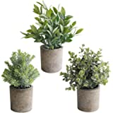 THE BLOOM TIMES Set of 3 Small Fake Plants Plastic Rustic Faux Potted Greenery Eucalyptus Boxwood Artificial Plants in Pots f