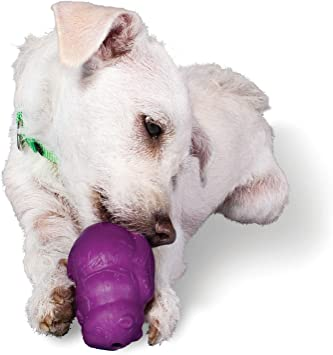 Amazon Com Premier Squirrel Dude Dog Toy Small Pet Chew Toys
