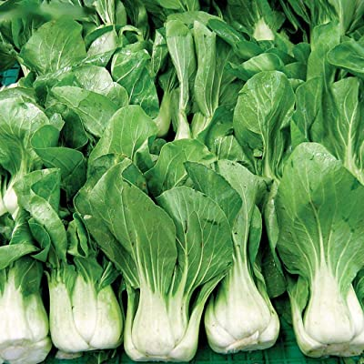 Oguine Garden-2000Pcs Chinese Pak Choi Cabbage Seeds Organic Heirloom Vegetable Plant Bulk ShangHaiQing White Cabbage Fresh Seeds Vegetables : Garden & Outdoor