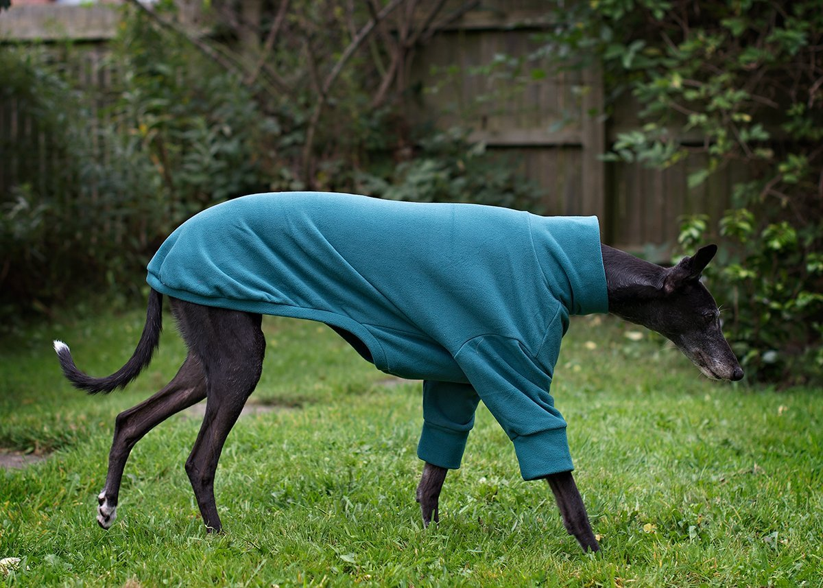 BEAUTIFUL WHIPPET, GREYHOUND JUMPER BY DOGANDHOME (ANIMAL PRINT, M ...