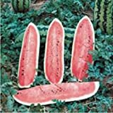 Watermelon, Jubilee, Heirloom, Organic 100 Seeds, Large, Sweet N Delicious