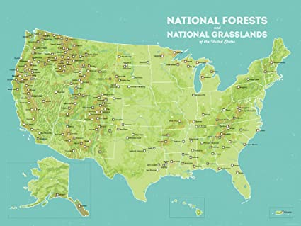 Amazoncom Us National Forests Map 18x24 Poster Green Aqua - Map-of-us-forests