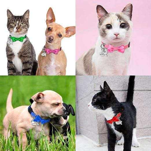 Didog nero speciale per gattini targhetta identificativa taglia XXS collare per gatti in morbida pelle scamosciata personalizzata cincill/à a forma di pesce
