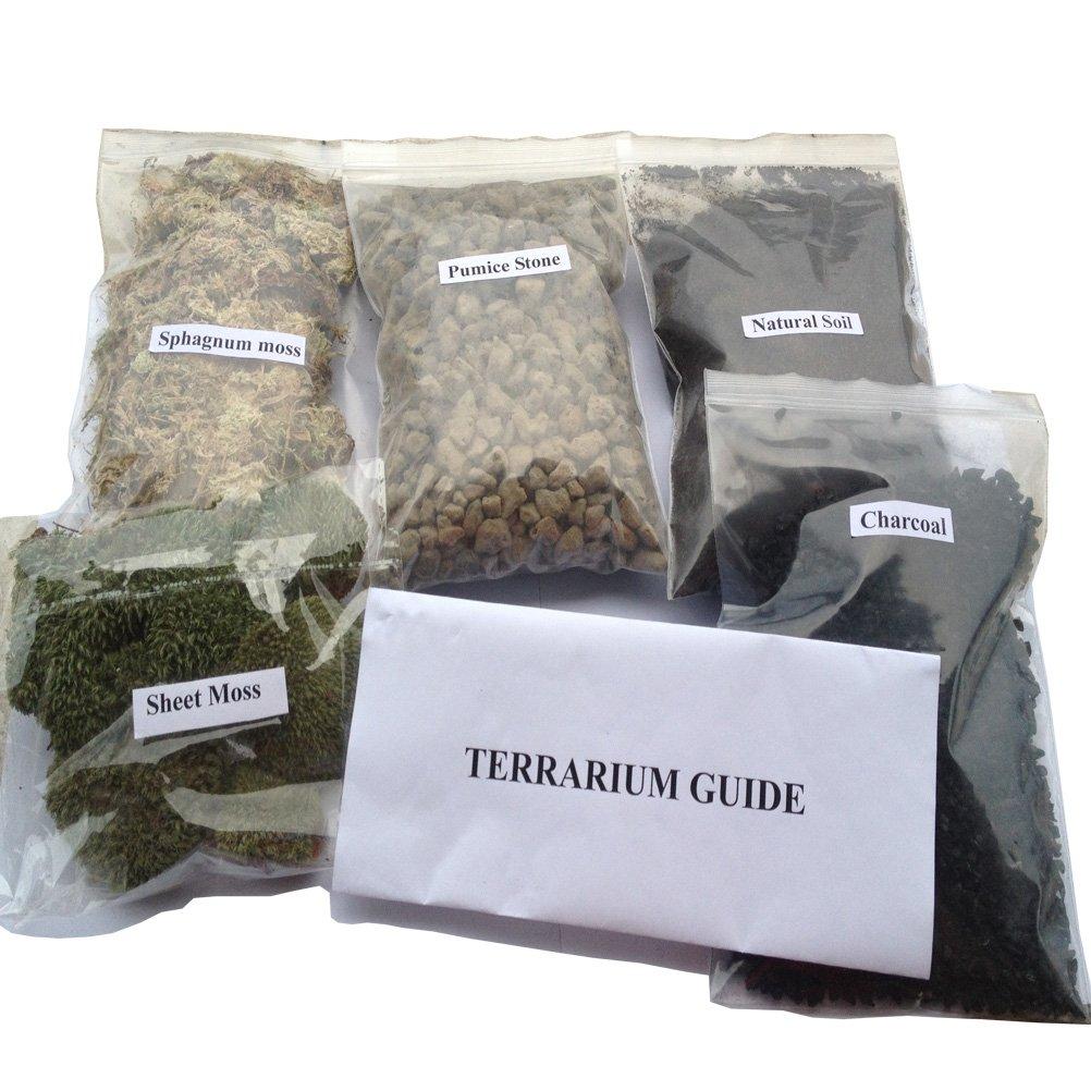 AmgateEu Terrarium/Feengarten Bastelkit, zum Kreieren Ihres eigenen Lebendterrarium oder zur Bepflanzung eines Feengartens