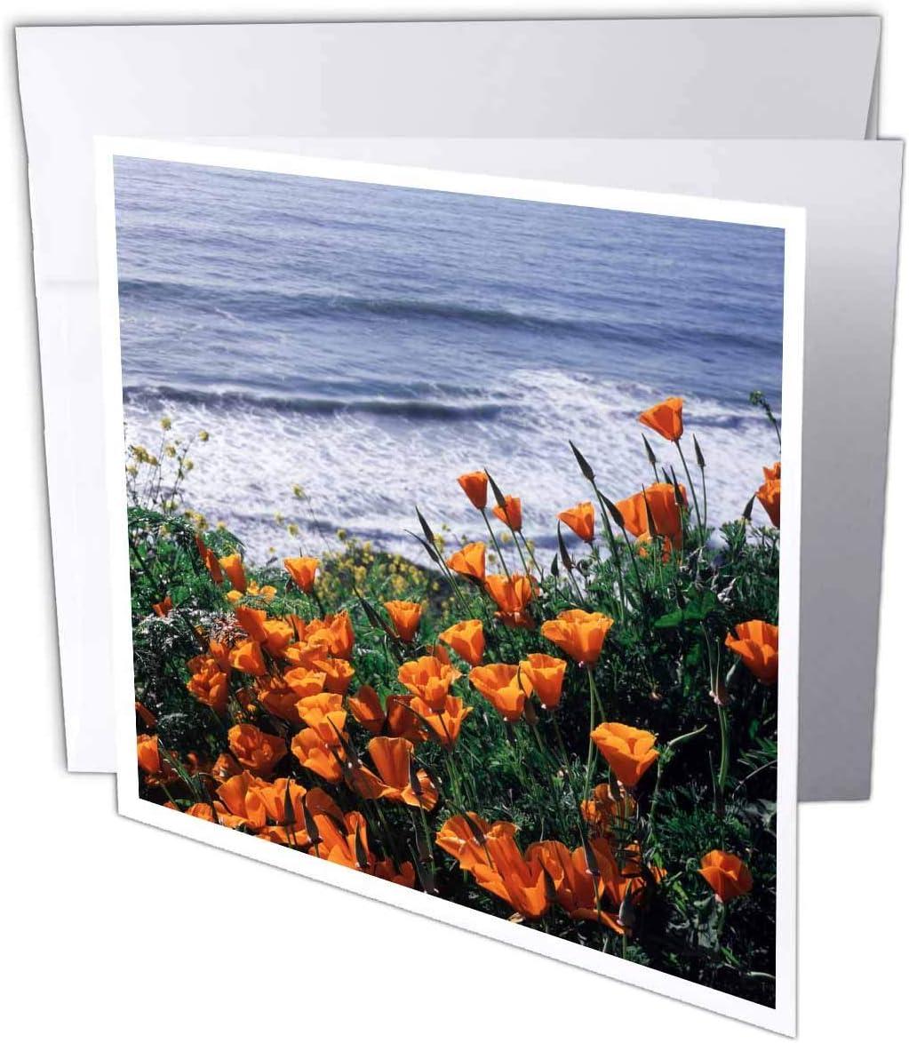"3dRose Big Sur Coast, California Poppy Wildflowers - Greeting Cards, 6"" x 6"", Set of 6 (gc_230024_1)"
