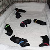 Double Bolster Pet Bed for Metal Dog Crates