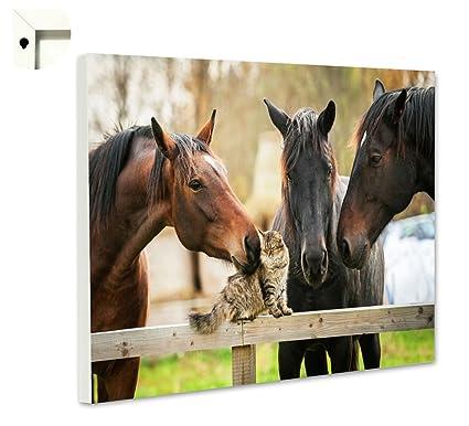 Pizarra magnética tablón Memo Tarjeta con Diseño de Animales ...