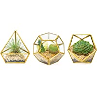 Mkono Glass Geometric Terrarium Container Planter Modern Tabletop DIY Display Box for Succulent Fern Moss Air Plants Miniature Fairy Garden Gift (Plants Not Included)