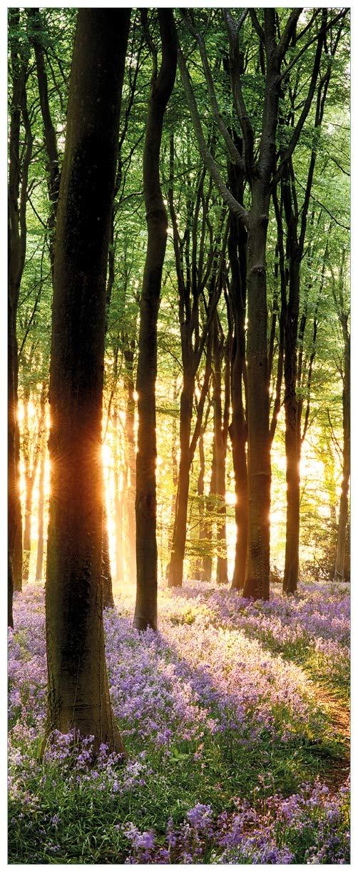Wallario Glasbild Blaue Hasenglöckchen im Wald mit Sonnenstrahlen - 32 x 80 cm in Premium-Qualität  Brillante Farben, freischwebende Optik