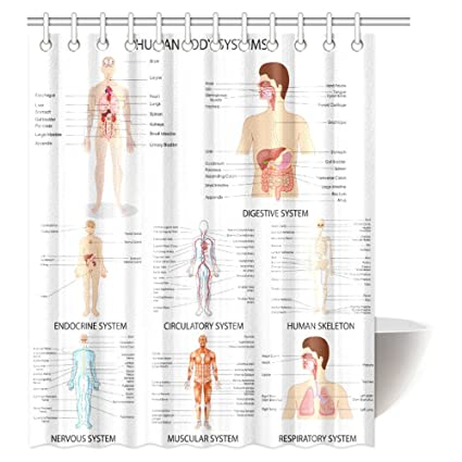 INTERESTPRINT Human Anatomy Shower Curtain Complete Chart Of Different Organ System Cell Life Medical
