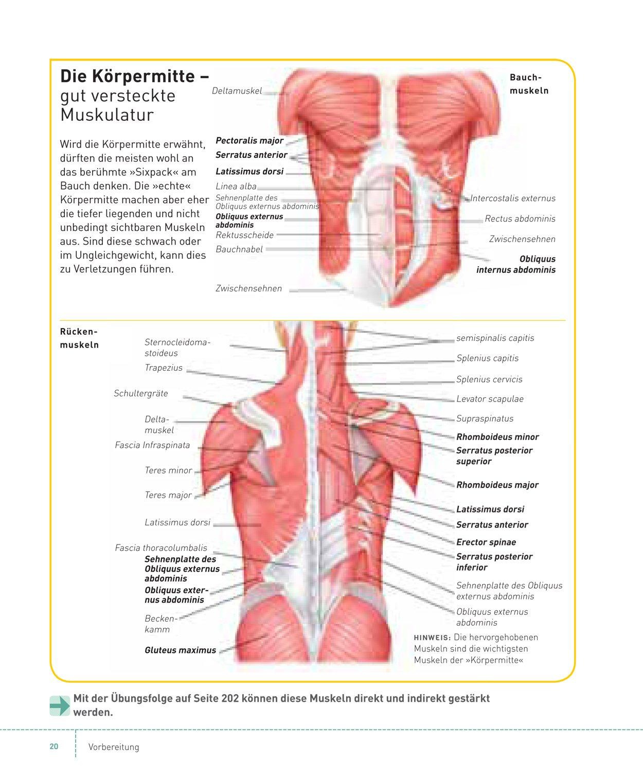 Berühmt Anatomie Des Weiblichen Bauch Und Becken Bilder ...