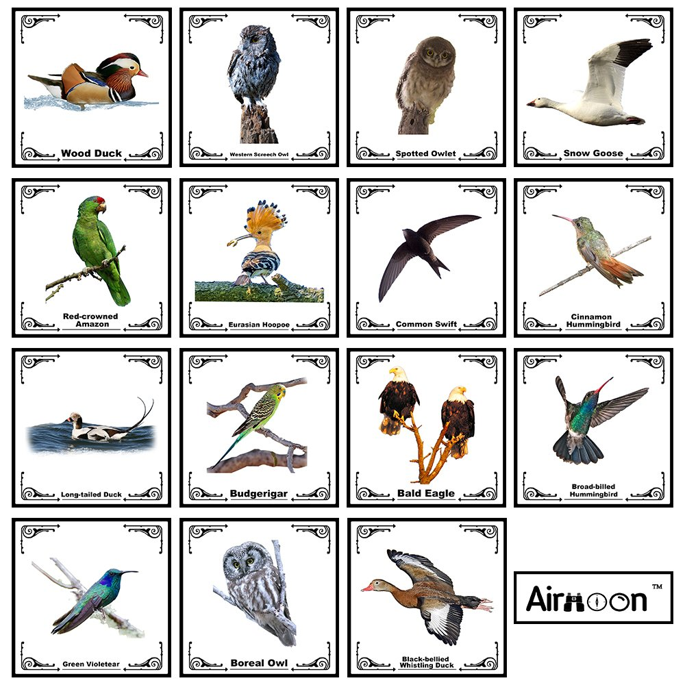 Airmoon Nature Discover Kit, Platinum Bird Watching Set for Kid, Pack of 24, for Explorer Jungle, Camping, Family Hiking, Educational and Bird Watching, Attractive package, Gift idea by Airmoon (Image #6)