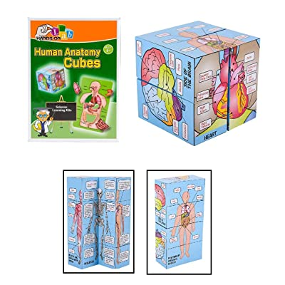 Hands-On Lab Learn Science Human Anatomy Cubes - Child Development Game: Toys & Games
