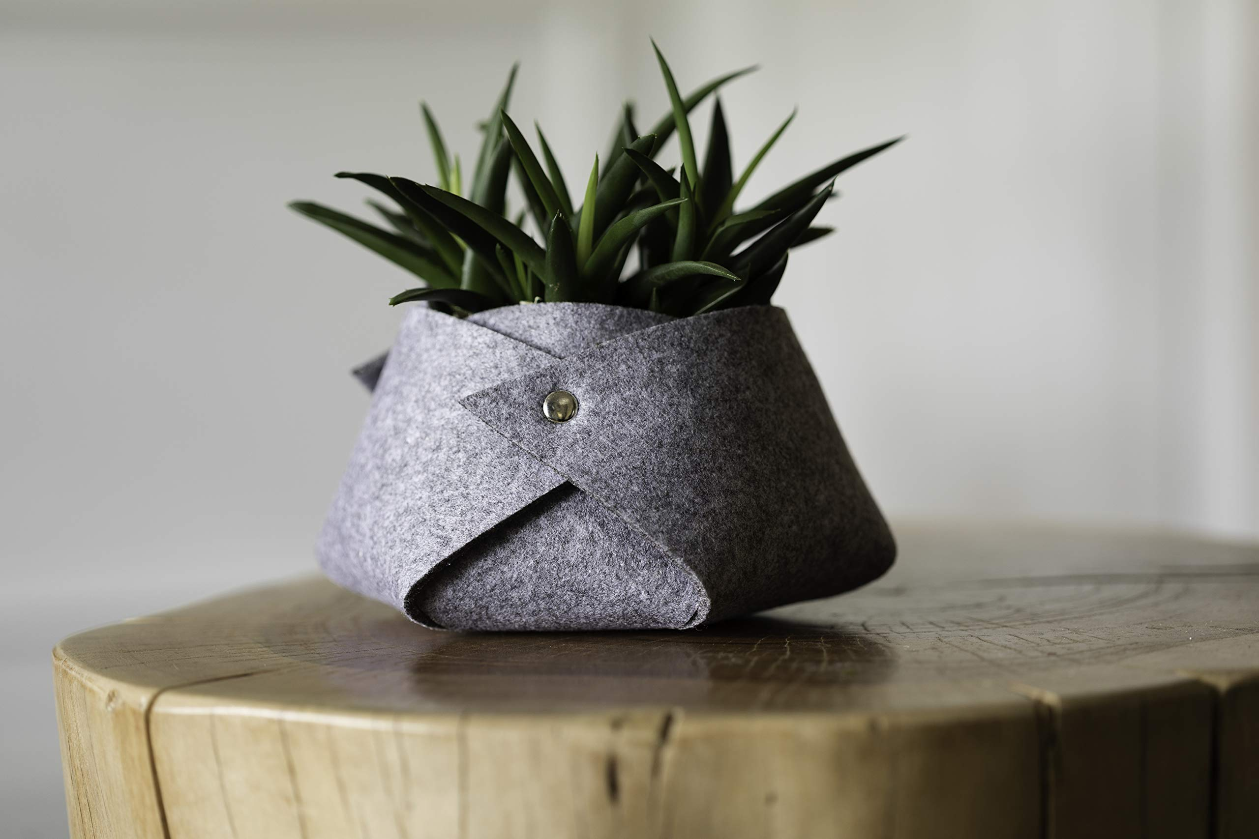 Live Succulents in Grey Fleece Container, From Hallmark Flowers by Hallmark Flowers (Image #2)