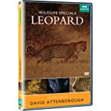 Wildlife Special's - Leopard