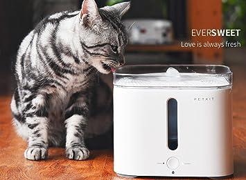 FILTRO (solo para bebedero Petkit EVERSWEET) 3 unidades: Amazon.es: Productos para mascotas