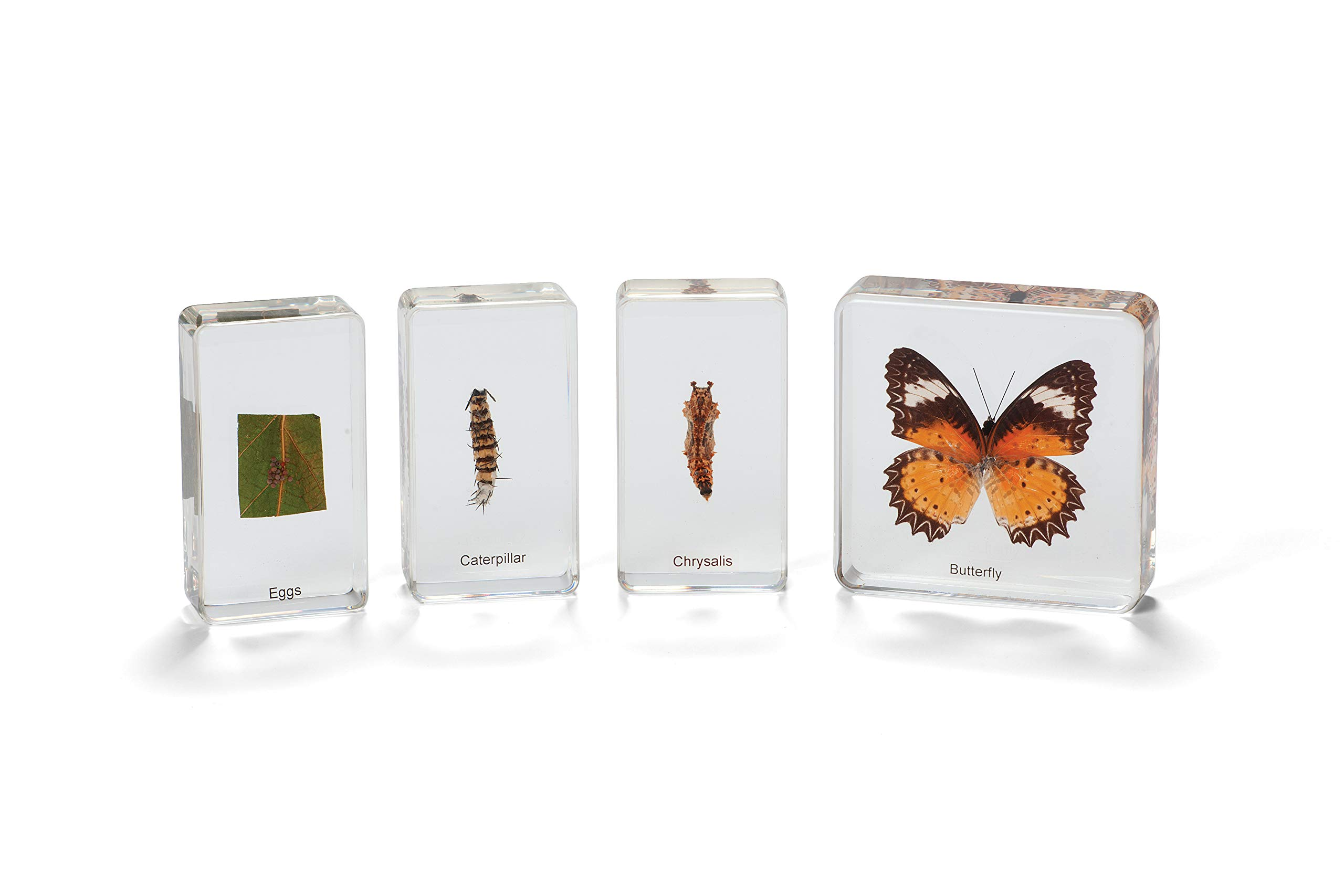 Cicada Education KB2711 Knowledge Builder Butterfly Life Cycle, Clear