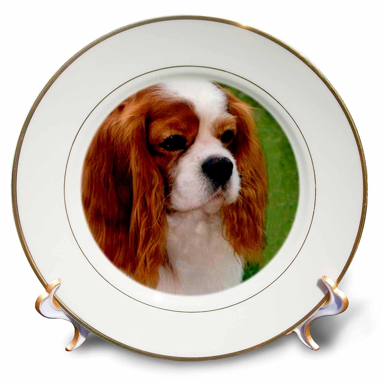 8 inch Porcelain Plate 3dRose Dogs Cavalier King Charles Spaniel Cavalier King Charles Spaniels cp/_980/_1