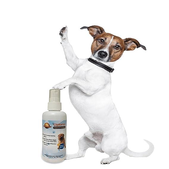 Uploria Pet World Pulgas para Mascotas en Spray para Perros y Gatos, Tratamiento de ácaros, Gatos y Perros con Problemas de Piel Picante, ...