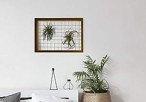 Ideaworks Large Air Plant Holder, Wooden Airplant Frame, Succulent Tillandsia House Plants Display, Shelve or Wall Hanger Decor