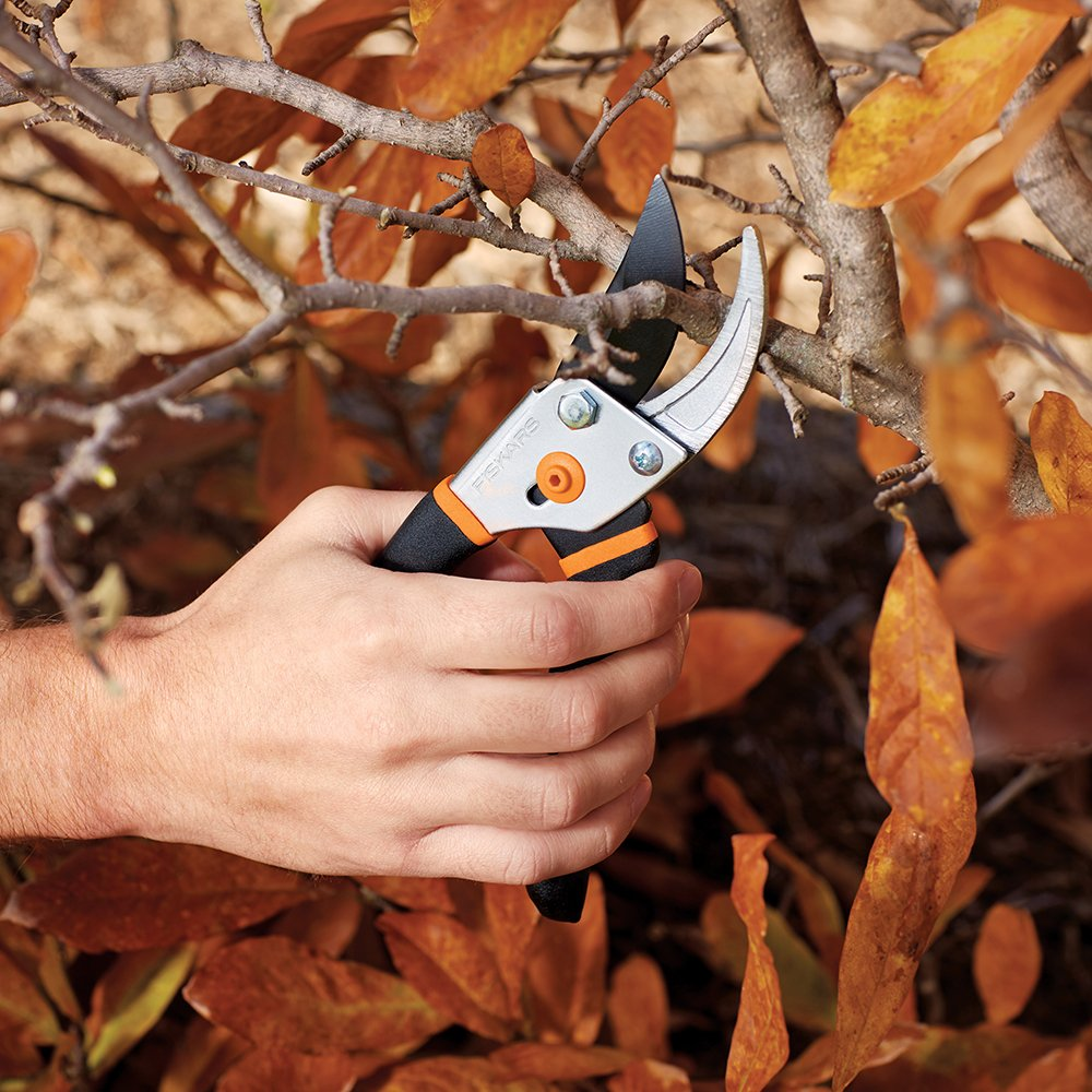 purchase pruning shears