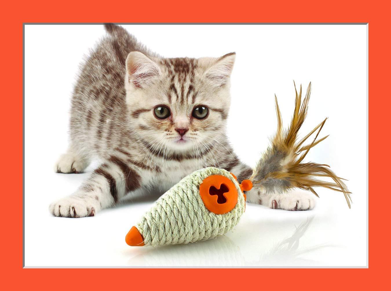 Cute Playful Kitten Staring (Copy)