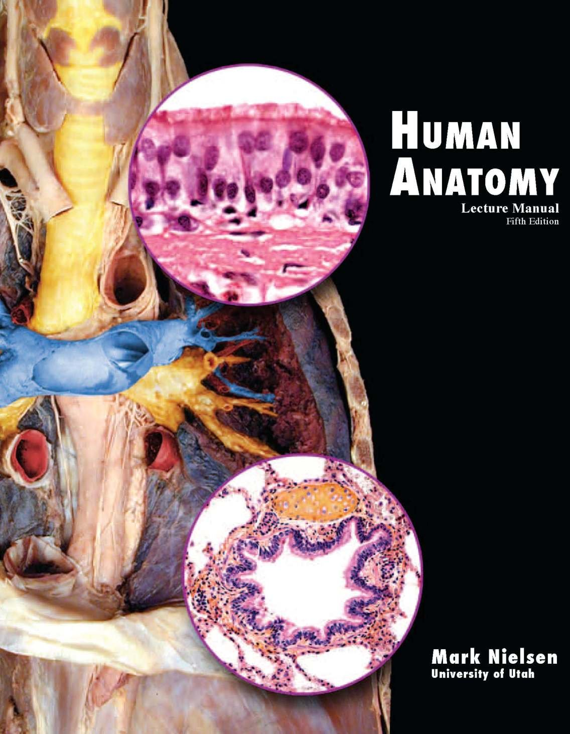 Buy Human Anatomy Lecture Manual Book Online At Low Prices In India