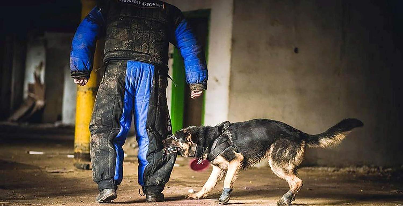 DINGO GEAR - Traje de Entrenamiento para Perros para señuelo de agitación IGP Sports