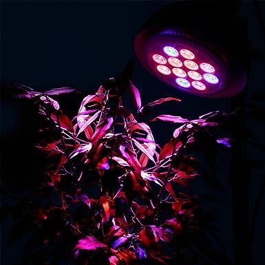 Wachstumslampe f/ür Hauspflanzen /• Wasserpflanzen 1000 lm orange | 3:6:3 LED Pflanzenlicht eSmart Germany Pflanzenlampe Leila mit Stativ // Lampenschirm blau 12 Watt rot