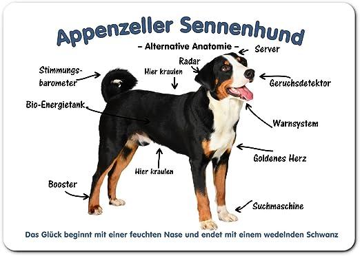 Merchandise For Fans Blechschild Warnschild Turschild Aluminium 15x20cm Appenzeller Sennenhund Alternative Anatomie 01 Amazon De Kuche Haushalt