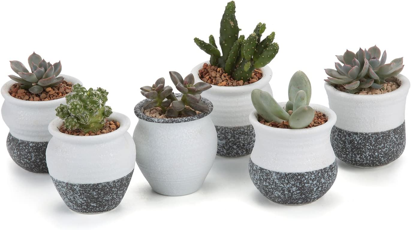 T4U Ceramic Mini Korea Style Snow Serial Full Set Succulent Plant Pot Cactus Plant Pot Flower Pot Container Planter Package 1 Pack of 6