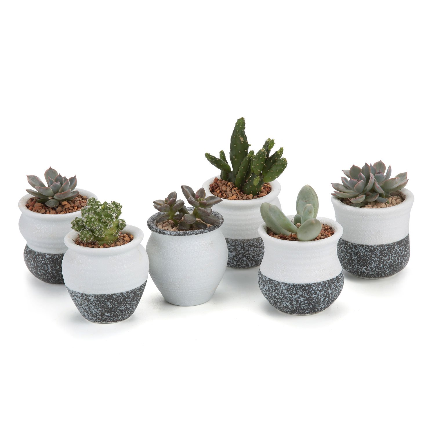 cacti pots. Black Bedroom Furniture Sets. Home Design Ideas