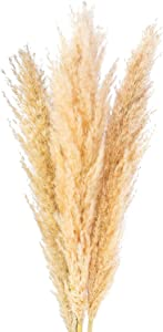 Tall Natural Dried Pampas Grass 36 Inch - 3 Large Fluffy Stems for Home Interior Decoration, Floral or Boho Wedding Arrangements and Events - Tan, Beige, Gold and White Tones