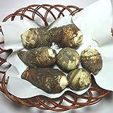 里芋(さといも)新芋 約500g 福岡産、九州産