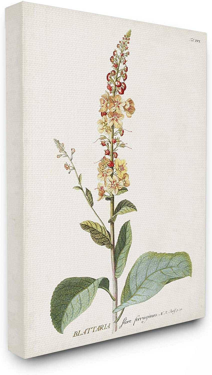Stupell Industries Botanical Plant Illustration Flowers Vintage Canvas Wall Art, 16 x 20, Design by Artist Unknown