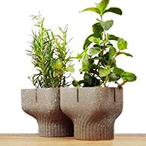 Alphapot - Plant Pots Made from Food Waste. Grow Easily in Nature. (Fruity Yellow)