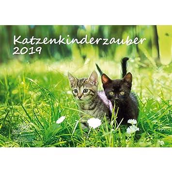 Gato mágica infantil · DIN A3 · Premium Calendario 2019 · gato Niño · gato bebé · Gatos · Stube Tiger · Animales · Set de regalo ...